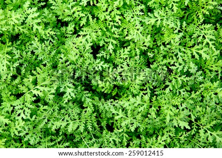 Background of fresh green leaves - stock photo