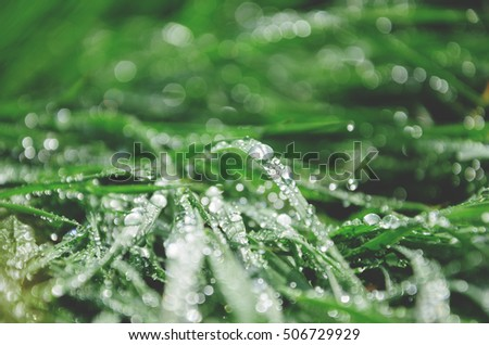 Background of fresh spring grass with water drops