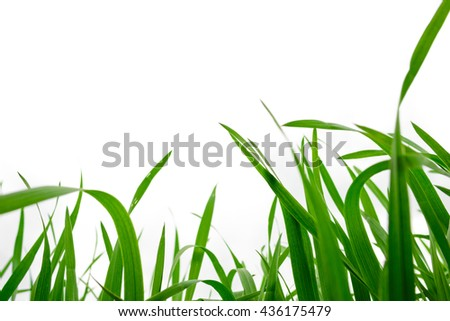 Background of freshly grown grass, shallow depht of field