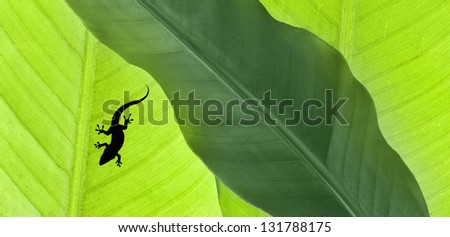 background of green banana leaves with  gecko lizard - stock photo