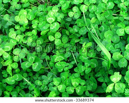 background of green clover - stock photo