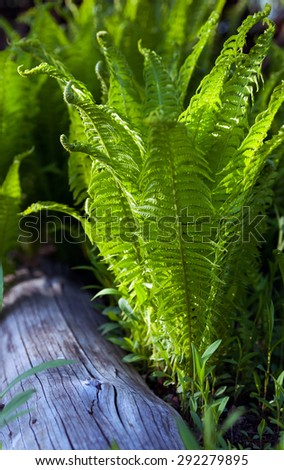 Background of green fern leaves in yard - stock photo