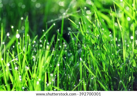 background of green fresh grass with dew in the morning - stock photo
