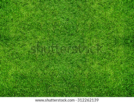 Background of green grass. - stock photo