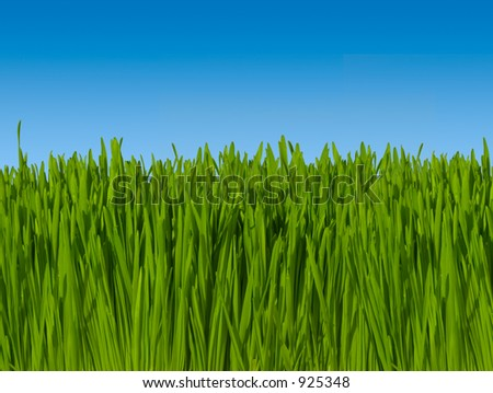 Background of Green Grass Against Blue Sky (Macro focus) ~ Includes Clipping Path