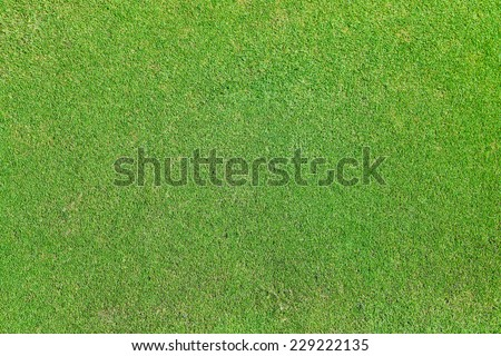 background of green grass field - stock photo