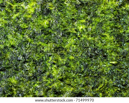Background of green seaweed - stock photo