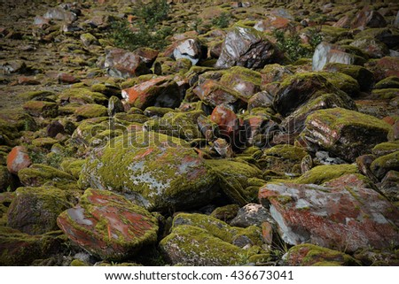 Background of Green valley,moss and stones in Franz Josef Glacier, New Zealand South Island - stock photo
