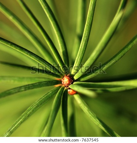 Background of green young coniferous twig - stock photo