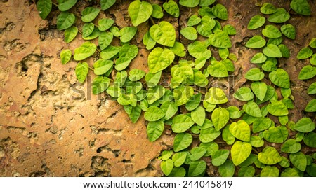 Background of grungy wall with greenery. Rough brown surface with holes decorated with green leaves hanging mostly on left side. Composition of old textured stone and fresh piece of nature. - stock photo