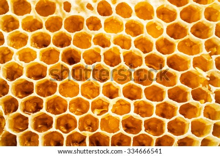 Background of honeycomb close-up - stock photo