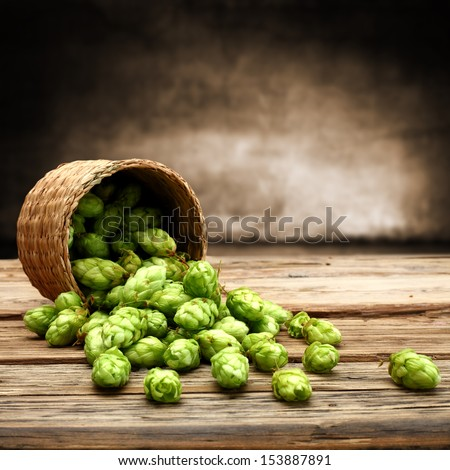 background of hops  - stock photo