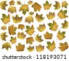 background of isolated maple leaves, natural pattern for design - stock photo