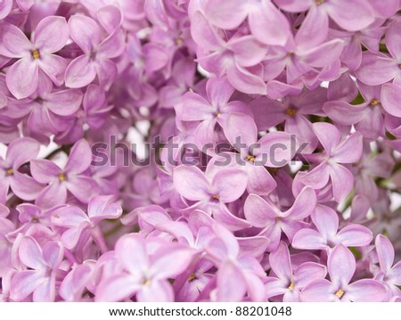 background of lilac - stock photo