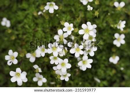 Background little white flowers blooming bush stock photo edit now background of little white flowers blooming bush mightylinksfo