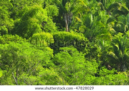 Background of lush tropical jungle at Pacific coast of Mexico - stock photo