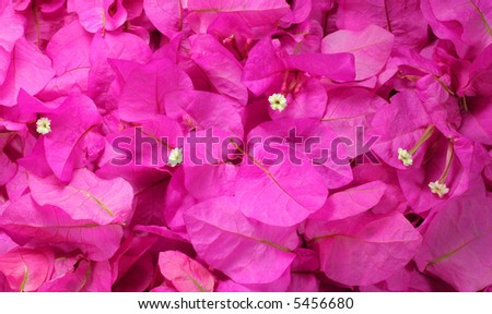 Background of magenta flowers