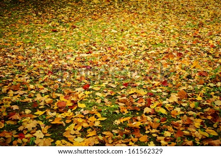 Background of many colored autumn leaves on green grass