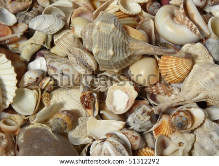 Background of many different seashells