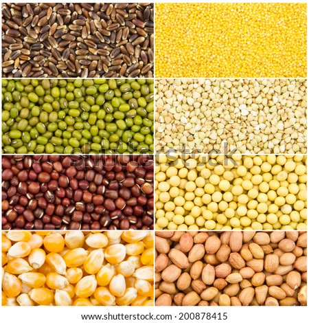 background of many kinds of different grains