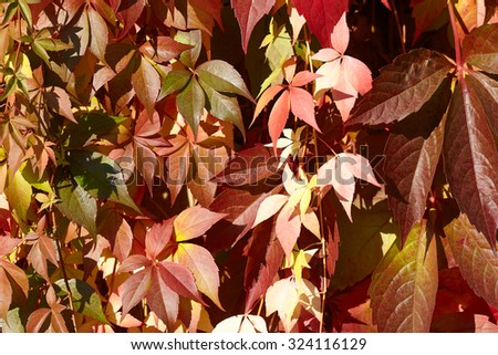 Background of multicolor autumn leafs. - stock photo