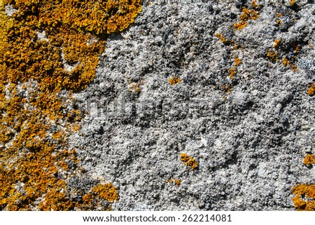 Background of old rough rock with fungus mold moss growing all over it. - stock photo