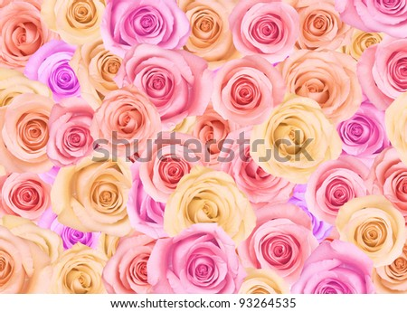 Background of pastel colored roses. - stock photo