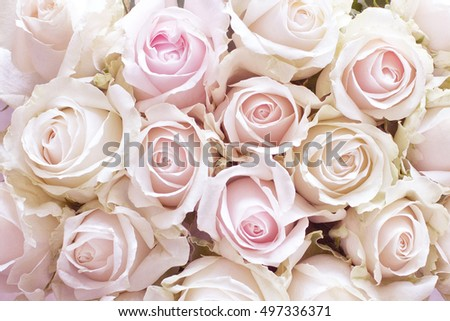 Background of pastel pink rose buds