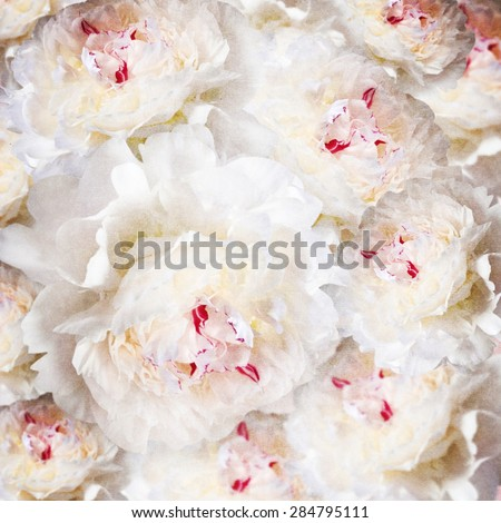 Background of peonies flower. - stock photo