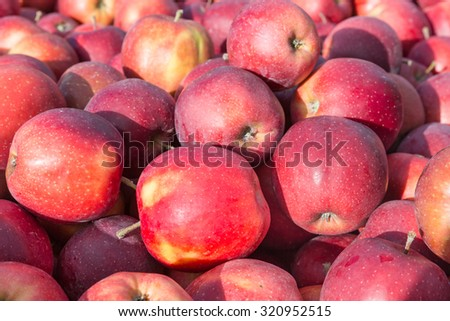 Background of picked ripe apples - stock photo