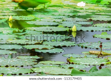 Background of pool with waterlilly from nature park. - stock photo