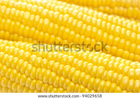 background of ripe yellow corn - stock photo