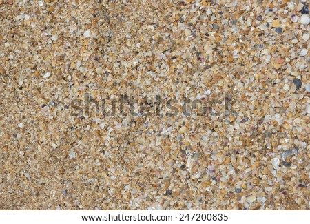 Background of sea sand and shells - stock photo