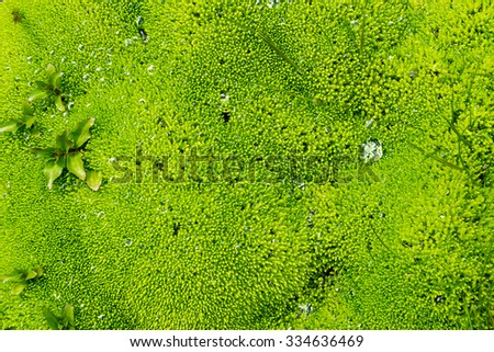 Background of some green moss seen in Iceland - stock photo