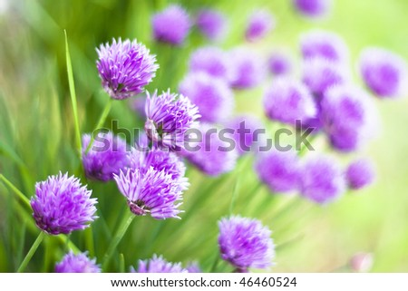 background of spring flowers - stock photo