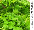 Background of stems and leaves of parsley - stock photo