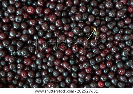Background of sweet and fresh organic dark cherries