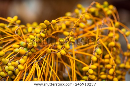 Background of sweet yellow date fruits close up - selective focus - shallow deep of field - stock photo