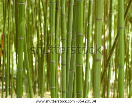 background of the bamboo alley - stock photo