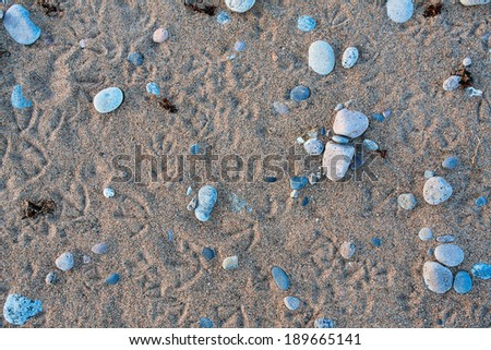 background of the beach - sand, stones and bird footprints - stock photo