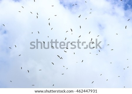 Background of The birds are flying in the sky.