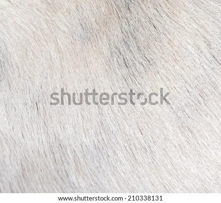 background of the dog's coat - stock photo