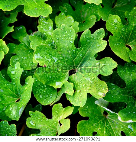 Background of the Fresh Green Leaves with Waterdrops - stock photo