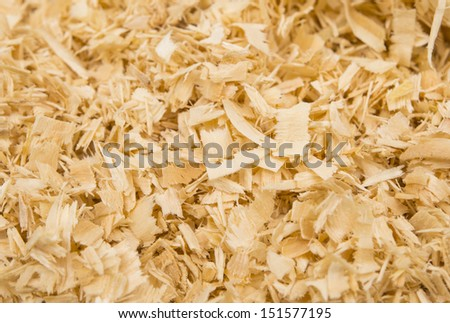 background of the golden curls of wood shavings - stock photo
