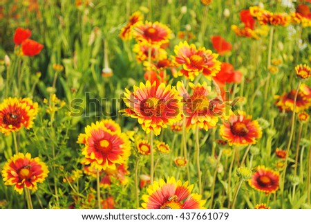 Background of the summer wildflowers - stock photo