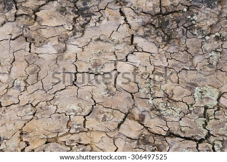 background of tree bark texture - stock photo