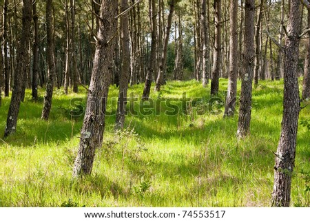 Background of trees and grass and wild vegetation