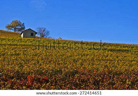 Background of vineyards on a summer day, Langhe, Piedmont, Italy