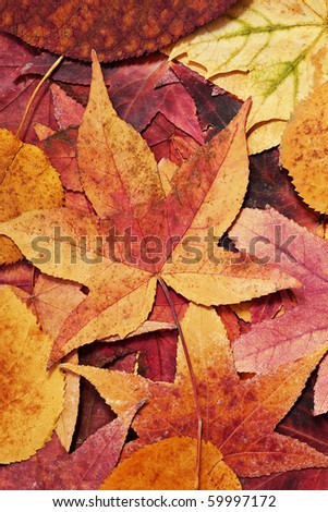 background of warm colored autumn leafs - stock photo