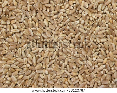 background of wheat grains